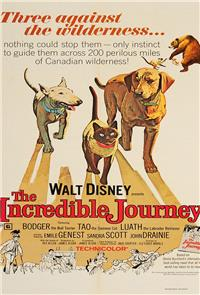 The Incredible Journey (1963) Poster