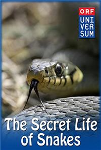 The Secret Life of Snakes (2016) 1080p poster