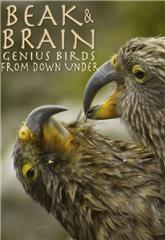 Beak & Brain - Genius Birds from Down Under (2013) Poster