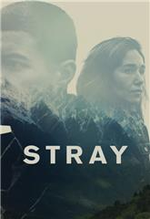 Stray (2018) 1080p web Poster