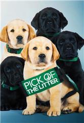 Pick of the Litter (2018) Poster
