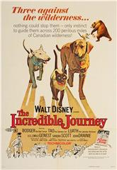 The Incredible Journey (1963) 1080p Poster
