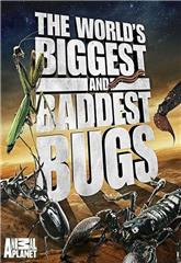 World's Biggest and Baddest Bugs (2009) Poster