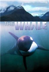 The Whale (2011) Poster