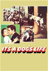 It's a Dog's Life (1955) 1080p Poster