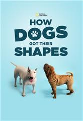 How Dogs Got Their Shapes (2016) Poster