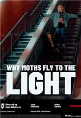 Why Moths Fly to the Light? (2020) 1080p Poster