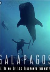 Galapagos: Realm of Giant Sharks (2012) Poster